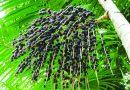 Você já conhece o óleo vegetal brasileiro de Açaí?